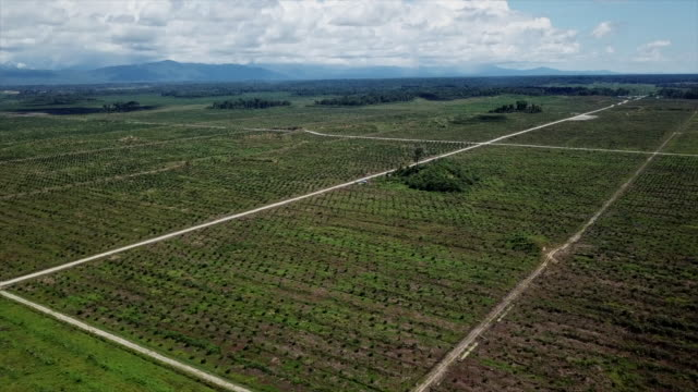 aerial views of palm oil plantations in papua new guinea - plantation stock videos & royalty-free footage