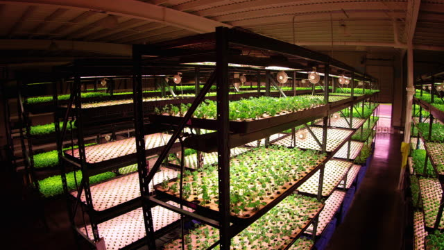 aerial views of the interiors of a warehouse lettuce farm - electric lamp stock videos & royalty-free footage