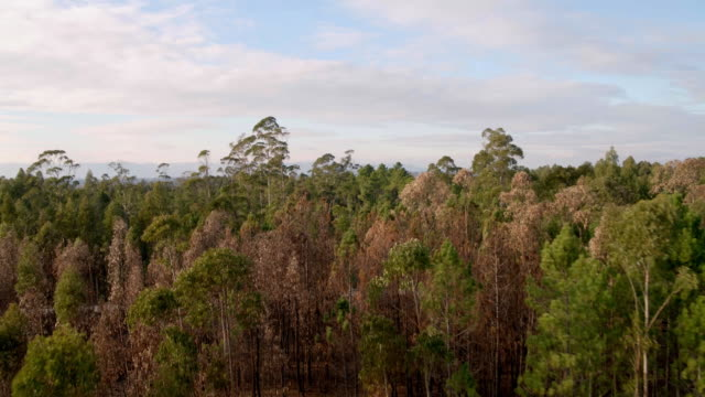 aerial views of trees in portugal - portugal stock videos & royalty-free footage