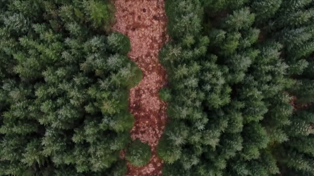 aerial views of woodland - evergreen stock videos & royalty-free footage