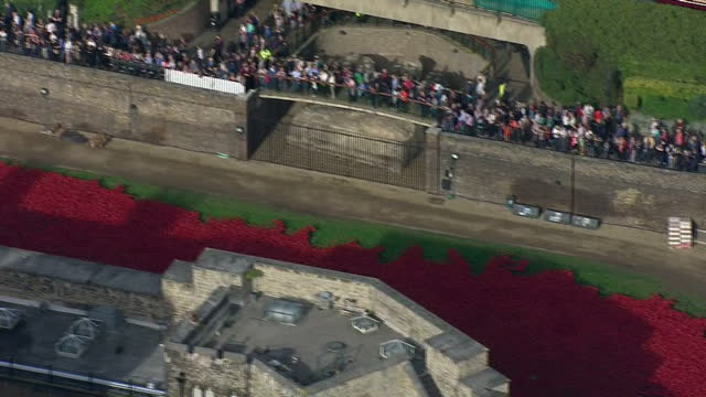 london aerial views tower of london with sea of red poppies surrounding the tower and crowds of tourists - surrounding stock videos and b-roll footage