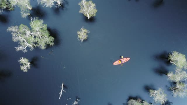 vídeos y material grabado en eventos de stock de aerial view/tourists who are kayaking in the rain in the samet forest. or melaleuca forest, national wetlands in rayong, thailand - kayak barco de remos