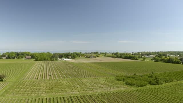 vídeos y material grabado en eventos de stock de aerial vineyard footage - hoja de la vid