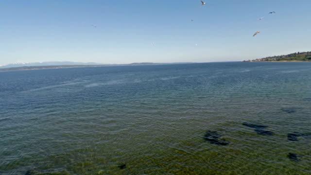 aerial washington puget sound - tide stock videos & royalty-free footage