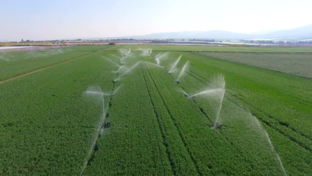 vídeos de stock, filmes e b-roll de aerial - water sprinklers spraying water in green wheat field - agriculture