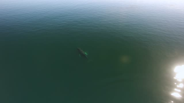 Aerial: Whales Swimming And Spraying In Green Ocean
