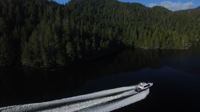 aerial: white motorboat driving next to thick, green forests - motorboat stock videos & royalty-free footage