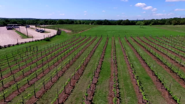 Aerial Wine to Market or Farm to Market in Vineyard Aerial Fly Over