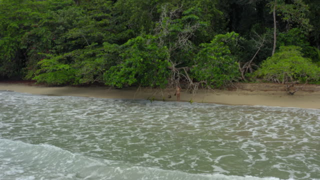 aerial: woman standing under tree on lush green jungle beach on tropical coast - tropical tree stock videos & royalty-free footage
