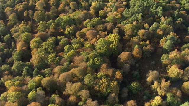 aerial woodland canopy - lush stock videos & royalty-free footage