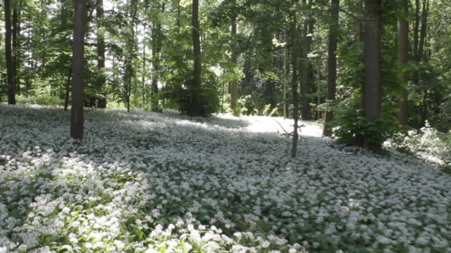 aerial w/s, atmospheric forest in spring - wildflower stock videos & royalty-free footage