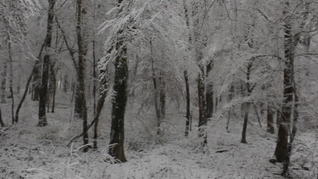 vidéos et rushes de aerial w/s, atmospheric forest in winter - zoom avant
