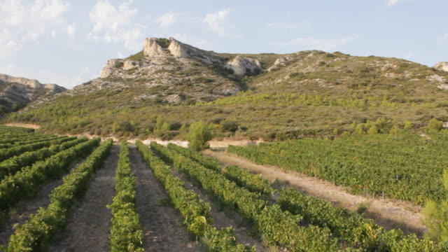 aerial w/s, atmospheric wineyard in the les alpilles - daydreaming stock videos & royalty-free footage