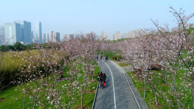 aerial wuxi jingkui cherry blossom in the park - von bäumen gesäumt stock-videos und b-roll-filmmaterial