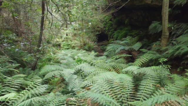aerial: young man hiking among lush green, blue mountains, australia - fern stock videos & royalty-free footage