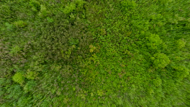 aerial zoom of lush, green prairie vegetation - botanical garden stock videos & royalty-free footage
