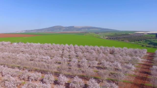 Aerial/Almond trees bloom in Jezreel Valley , Israel