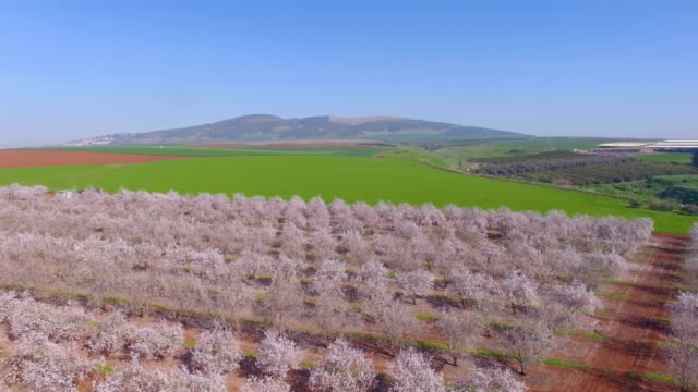 aerial/almond trees bloom in jezreel valley , israel - アーモンド点の映像素材/bロール