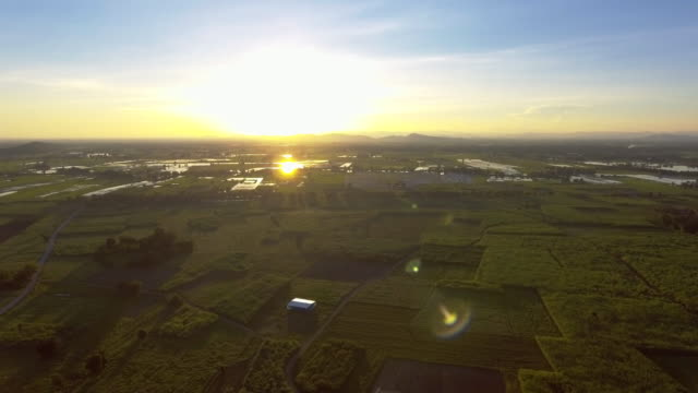 Aerial:Flight over the wheat field at sunrise