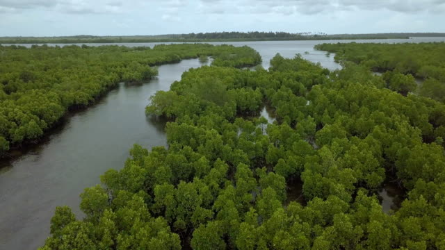 aerial/mangrove forest ecosystem, indian ocean coast of east africa - zanzibar archipelago stock videos & royalty-free footage