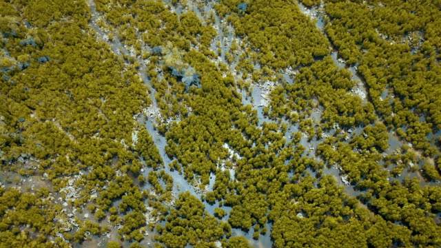 aerial/mangrove swamps along the indian ocean coast of east africa - sumpf stock-videos und b-roll-filmmaterial