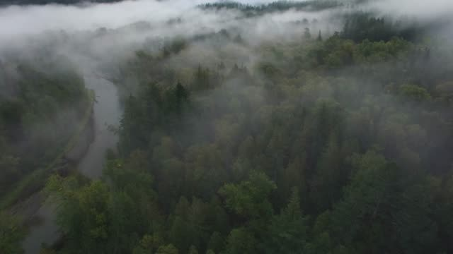 aerial/pan down: clouds down to foggy forest, tops of thick, green trees - moving down stock videos & royalty-free footage