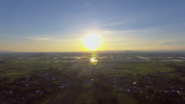 Aerial:Rice fields at sunset