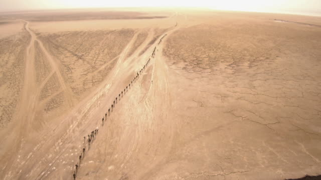 aerials of extremely long camel train, ethiopia - camel train stock videos & royalty-free footage