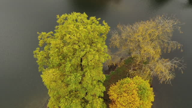 aerials of trees in autumnal colours at stourhead national trust, wilsthire - leaf stock videos & royalty-free footage