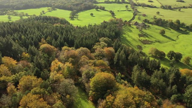 aerials of trees in autumnal colours at stourhead national trust, wilsthire - wiltshire stock videos & royalty-free footage