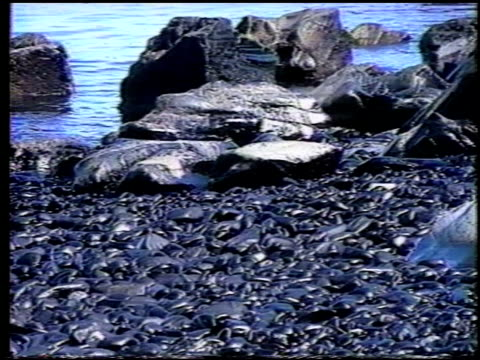 vídeos de stock e filmes b-roll de / aerials over prince william sound / cleanup efforts after exxon valdez oil spill / workers using high pressure hoses to clean oil from rocks /... - derrame de petróleo