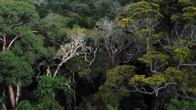 aerials view of the amazon rainforest and deforestation - amazon region stock videos & royalty-free footage