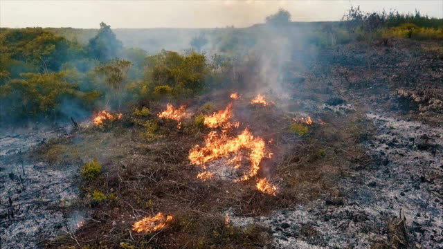 vidéos et rushes de aerial/slash-and-burn agriculture converts forest to farm land - burning