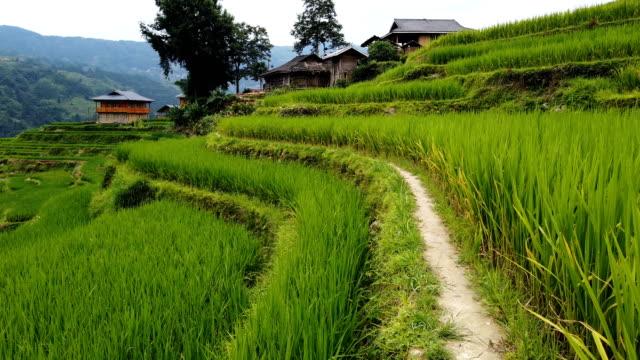 vidéos et rushes de aerila vue des maisons de village parmi les rizières en terrasses,jiabang,guizhou,china. - rizière
