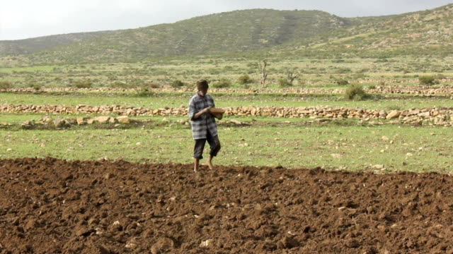 afar man sowing seeds on august 16 2011 on road from makele to addis ababa ethiopia - sowing stock videos & royalty-free footage