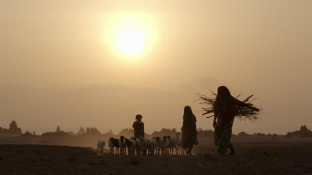 vídeos de stock, filmes e b-roll de afar people herding goats and weaving - grupo mediano de animales