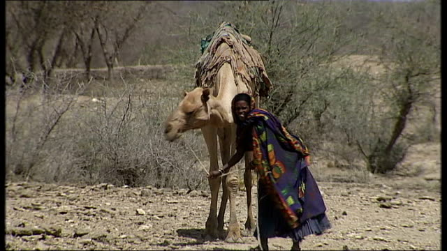 vídeos y material grabado en eventos de stock de nomadic tribesmen / women and children in traditional costume / camels in desert afar nomads in desert land / female nomad as pulling camel / female... - etiopía
