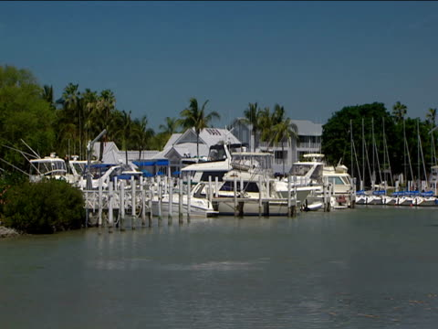 Affluent Florida marina with cruisers palm trees in background
