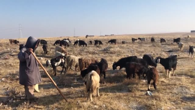 afghan sheep farmers and carpet weavers says that their livelihoods are under threat as changing weather patterns wreak havoc - farmer stock videos & royalty-free footage