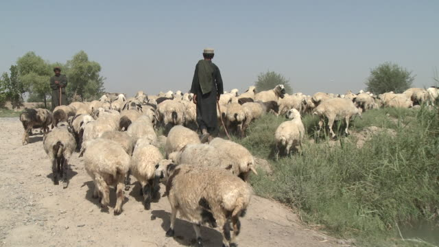 afghan shepherds guide their flock along a dirt road. - shepherd stock videos & royalty-free footage