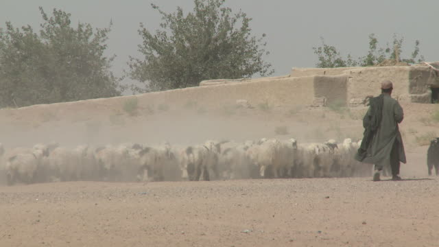 Afghan shepherds herd sheep between a U.S. Marine Humvee and a stone building.