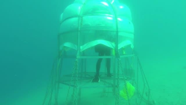 aficionados al submarinismo lanzaron en liguria en el noreste de italia lograron cultivar albahaca bajo el mar y ahora esperan poder exportar su idea... - planeta stock videos & royalty-free footage