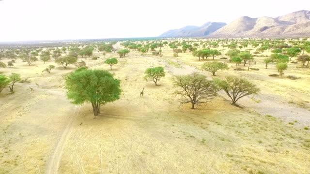 vídeos y material grabado en eventos de stock de desierto de áfrica - desierto del kalahari