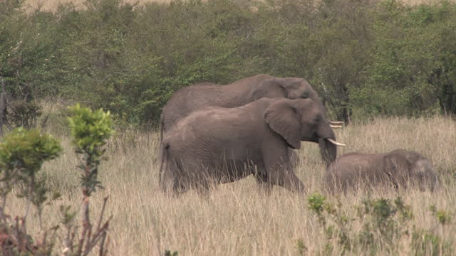 africa - elephants moving - tree trunk stock videos & royalty-free footage
