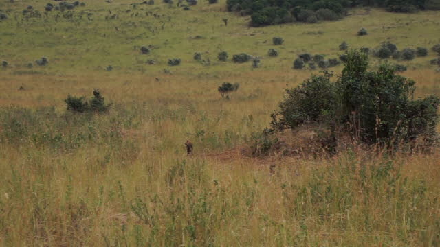 africa - hyenas - hole stock videos & royalty-free footage