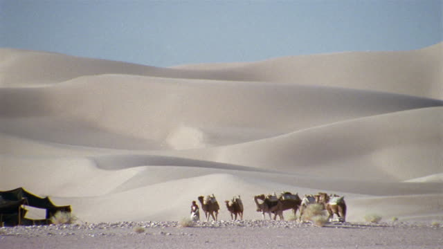 ws, pan, africa, man leading camel train through desert - see other clips from this shoot 1007 stock videos & royalty-free footage