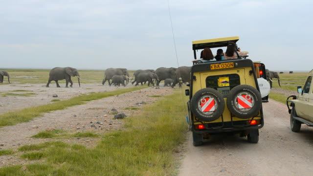 vídeos y material grabado en eventos de stock de ms africa safari vehicles with tourists and elephant herd walking between vans / amboseli national park, kenya - safari