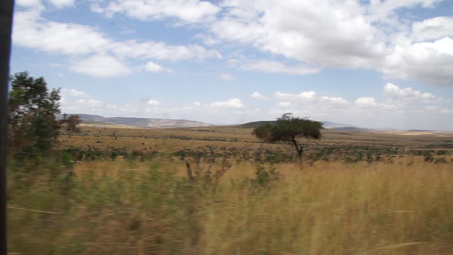 africa - scenery of grassland from moving car - dondolarsi video stock e b–roll