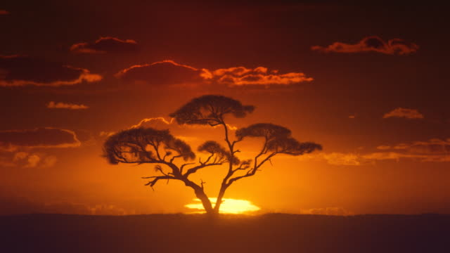 Africa. Sun inferior mirage. African timelapse sunrise. Acacia tree.