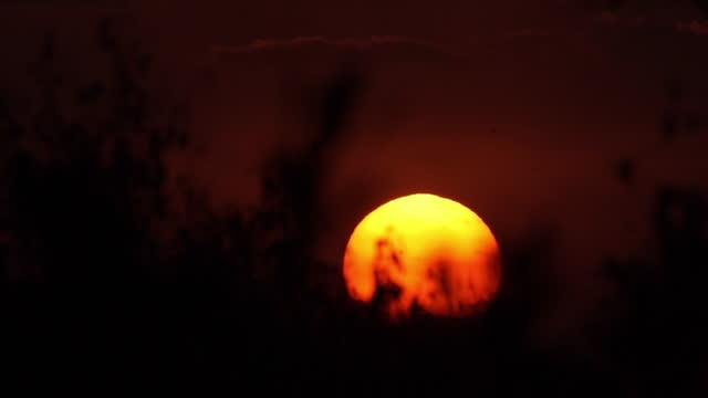 africa - sunset - controluce video stock e b–roll